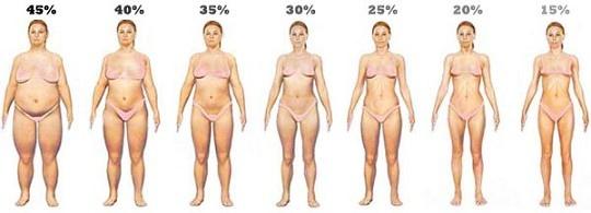 女性-體內脂肪比例