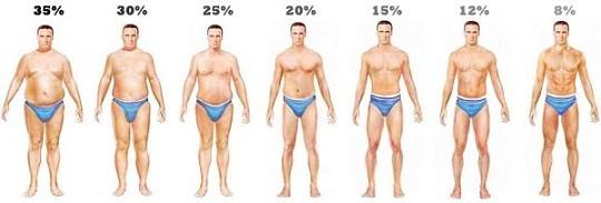 男性-體內脂肪比例